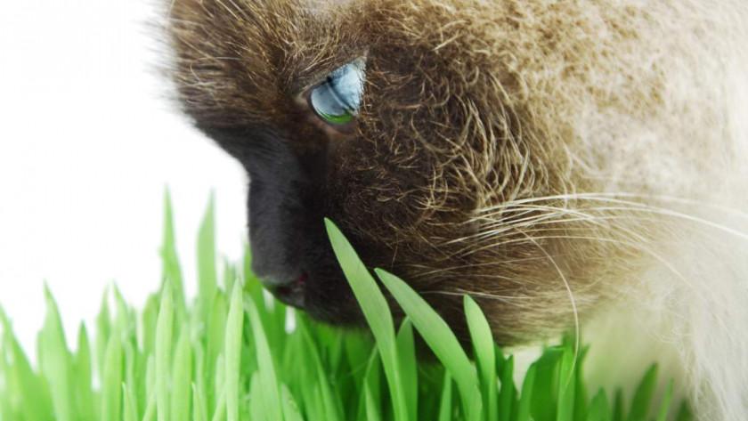 Meilleur répulsif pour chats en 2020 : guide d'achat