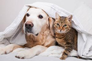 chat chien album photo
